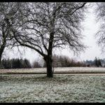 Rauhreif-am-Wundersberg-zu-Neujahr-026