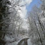 Fruehlingsbeginn-in-Krenglbach-20-03-2021-012