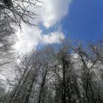 Fruehlingsbeginn-in-Krenglbach-20-03-2021-016