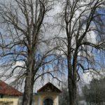 Fruehlingsbeginn-in-Krenglbach-20-03-2021-019