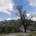 Fruehlingsbeginn-in-Krenglbach-20-03-2021-020