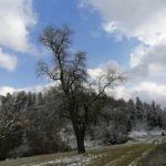 Fruehlingsbeginn-in-Krenglbach-20-03-2021-021