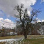 Fruehlingsbeginn-in-Krenglbach-20-03-2021-023