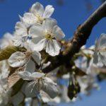 Fast-schon-Mai-in-Oberham-014