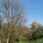 Fast-schon-Mai-in-Oberham-026