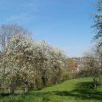 Fast-schon-Mai-in-Oberham-027