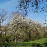 Fast-schon-Mai-in-Oberham-028