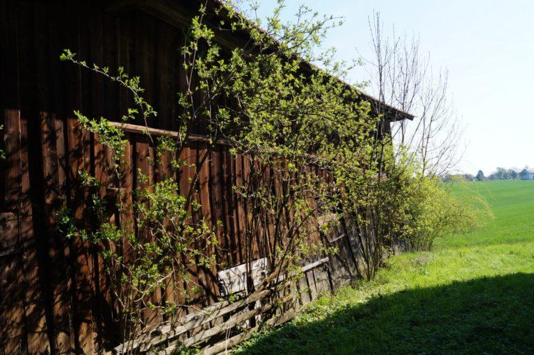 Fast-schon-Mai-in-Oberham-030