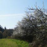 Fast-schon-Mai-in-Oberham-036