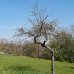 Fast-schon-Mai-in-Oberham-046