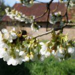 Fast-schon-Mai-in-Oberham-051