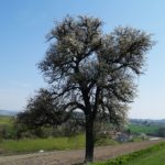 Fast-schon-Mai-in-Oberham-060
