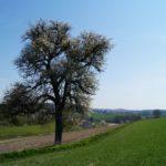 Fast-schon-Mai-in-Oberham-061