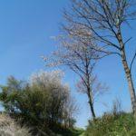 Fast-schon-Mai-in-Oberham-069