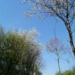 Fast-schon-Mai-in-Oberham-071