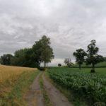 Juni-2021-Krenglbach-085
