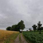 Juni-2021-Krenglbach-086