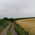 Juni-2021-Krenglbach-089