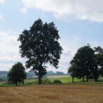 Krenglbach-im-Juli-2021-45