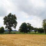 Krenglbach-im-Juli-2021-71