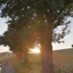 Krenglbach-im-Juli-2021-82