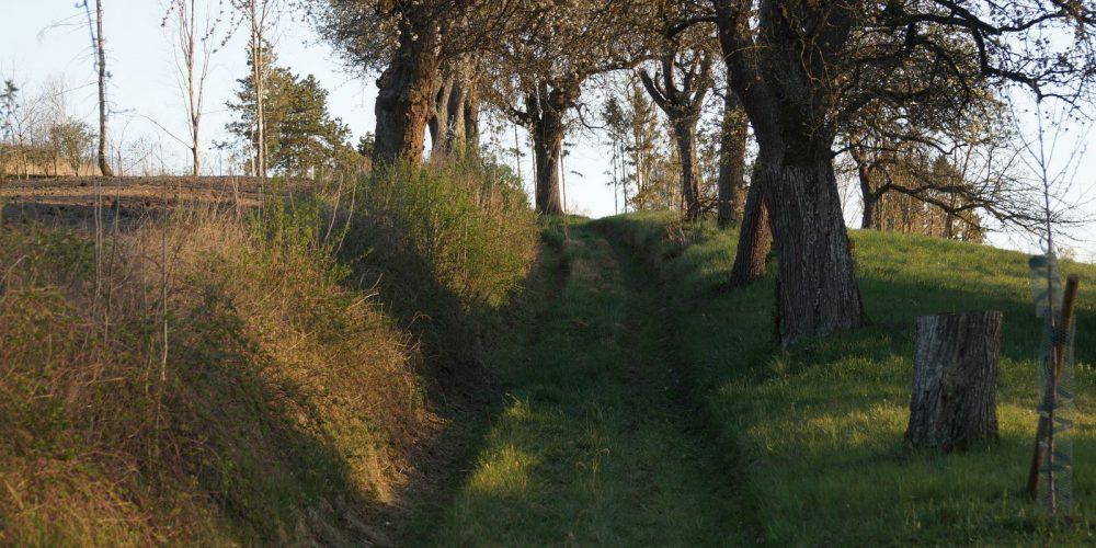 Bilder aus Krenglbach in der Karwoche – frohe Ostern!